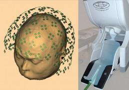 neuroscienza cervello